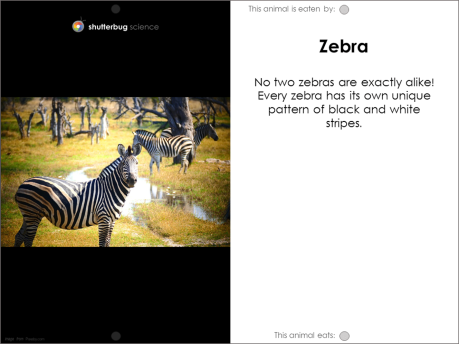 Zebra food web card