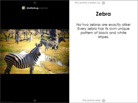 Zebra food web card